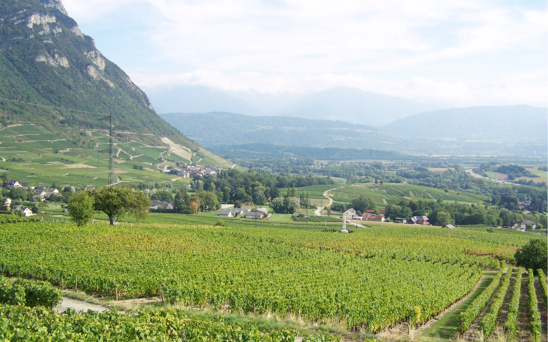 325/Chambery_SP/vignoble_1.jpg
